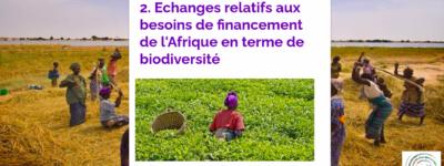 [Afrique] Finance verte et discernement